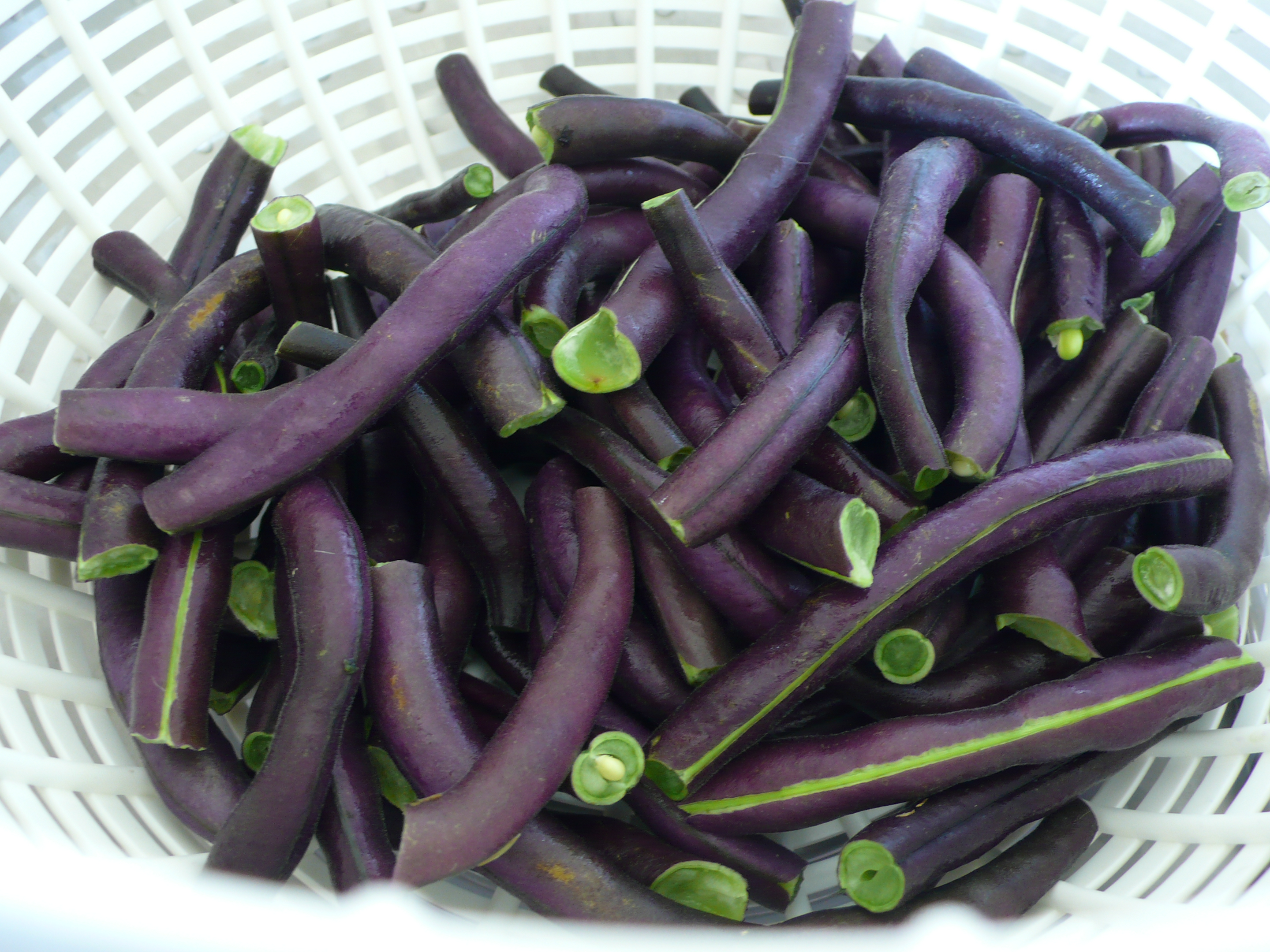 purple green beans