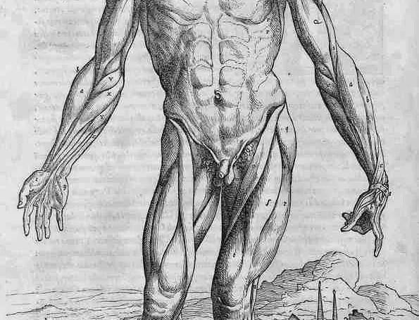 Illustration from De Humani Corporis Fabrica by Andreas Vesalius