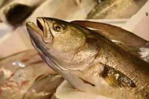 Branzino fish