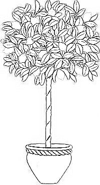 italophile coloring pages lemon tree