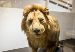 MUSE: IL MUSEO DI STORIA NATURALE A TRENTO