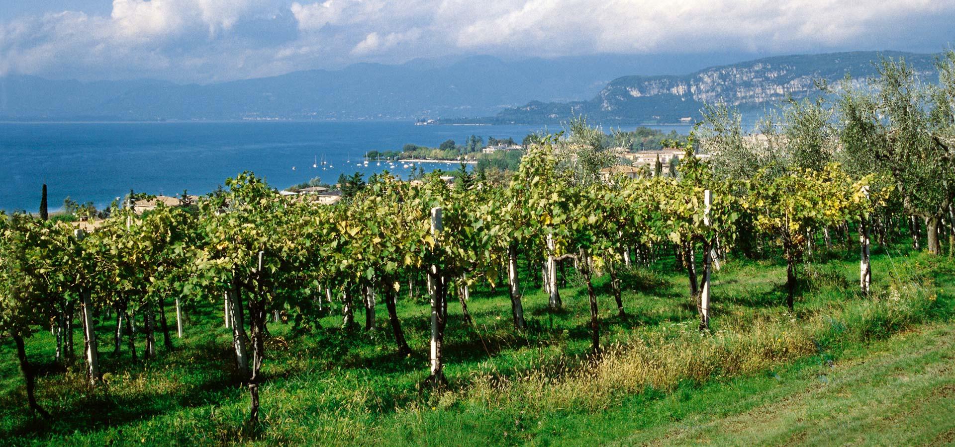 wine-garda-lake