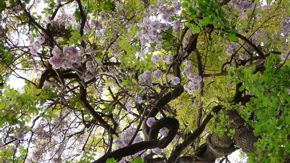 isola-del-garda-parco-primavera