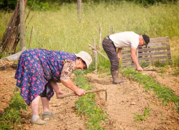 My neighbors, a brother and sister, hard at work in their large vegetable garden.