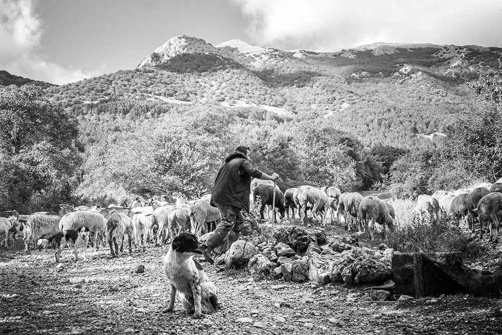 shepherd, italywise