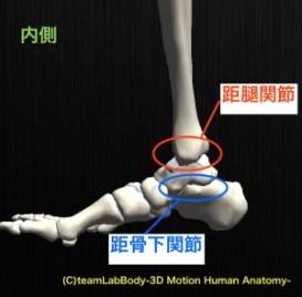 足関節 内側