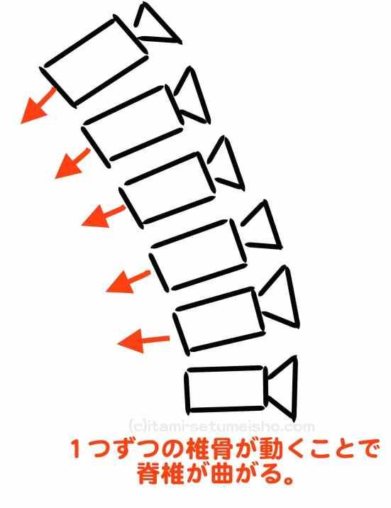 脊椎 屈曲-min