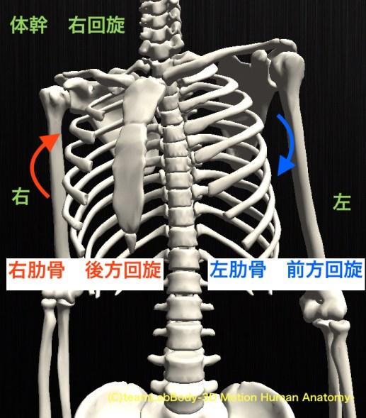 肋骨 回旋
