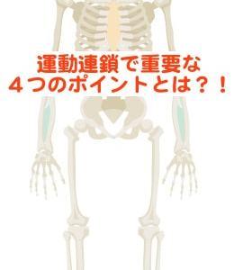 運動連鎖で超重要な4つのポイントとは?! 骨盤と足関節の動きを理学療法士がご紹介!