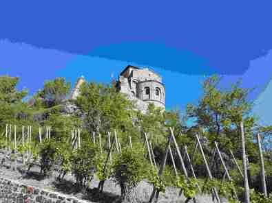 L'église prieurale entourée de vignes