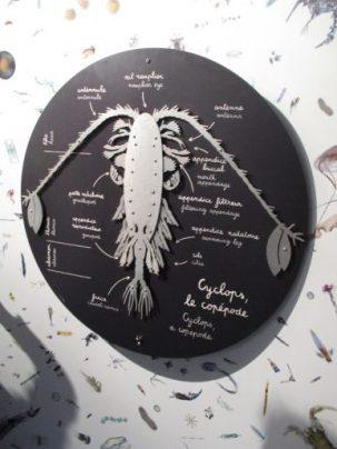 CYCLOPS, explorateur de l'océan