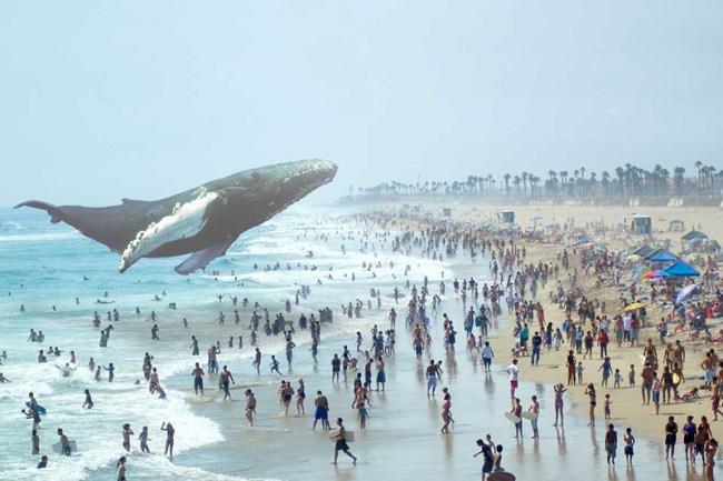 whale_1136.0.0_standard_800.0