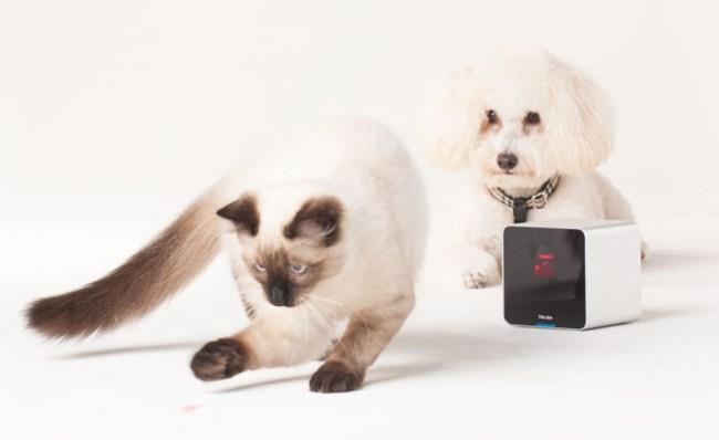В Украине стартуют продажи Petcube - гаджета для животных