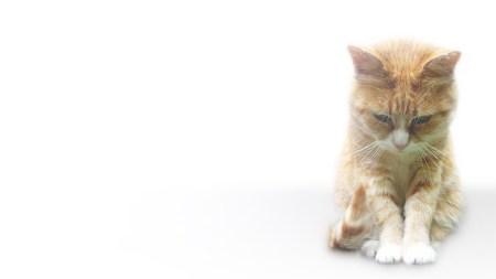 Исследование Facebook: хозяева кошек – одинокие и угрюмые люди, тогда как владельцы собак, напротив, очень дружелюбны, жизнерадостны и общительны
