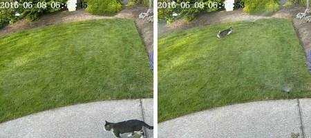 Сотрудник NVIDIA научил нейросеть защищать газон от соседских котов