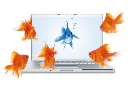 Украинская ассоциация ЕМА составила классификацию фишинговых сайтов: чаще всего имитируют Portmone.com и обманывают на пополнении мобильных
