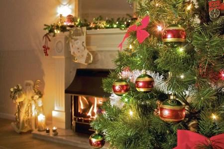Гослесагентство Украины разработало мобильное приложение «Ялинка», которое позволяет проверить легальность новогодней елки