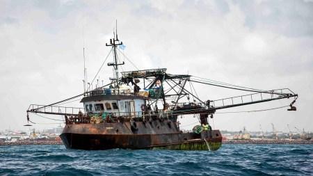 Дроны помогут бороться c браконьерами у берегов Сейшельских Островов
