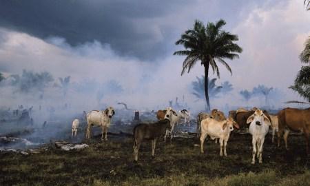 Доклад WWF: за полвека человечество уничтожило 60% животных на Земле