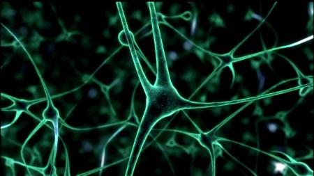 Выращенные «в пробирке» нейроны стали проявлять электрическую активность, похожую на активность человеческого мозга