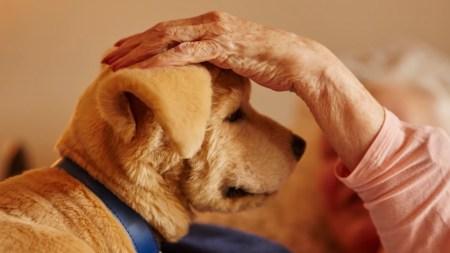 Jenny — робощенок, предназначенный для эмоциональной поддержки пожилых людей