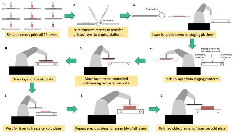 """Параллельная 3D-криопечать открывает дорогу к созданию донорских органов """"по требованию"""""""