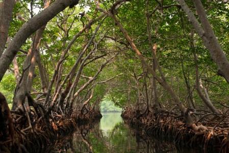 В Мьянме высадят миллиард деревьев при помощи БПЛА