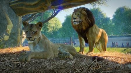 Студия Frontier Developments анонсировала симулятор зоопарка Planet Zoo