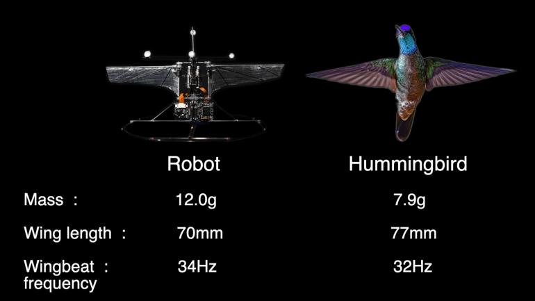 Американские инженеры научили робоколибри отслеживать рельеф местности и обнаруживать препятствия без использования каких-либо датчиков