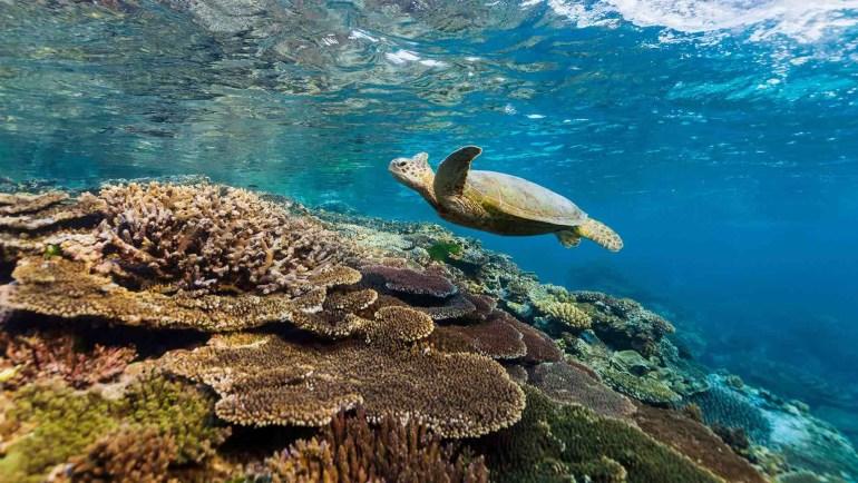 """В Австралии запускают """"подводное такси"""" scUber, с помощью которого можно будет исследовать Большой барьерный риф на субмарине [видео]"""