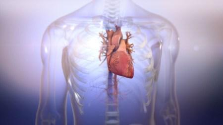Стартап Biolife4D напечатал работоспособное мини-сердце