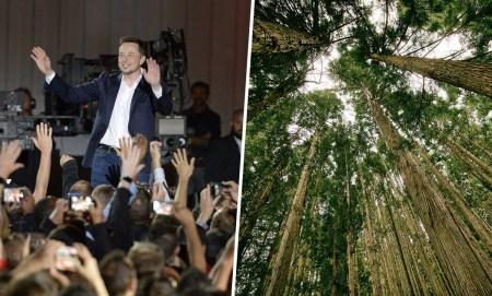 После заявления о «финансовой неликвидности» под присягой Илон Маск пожертвовал $1 млн на посадку деревьев в рамках кампании #TeamTrees. «Украина» тоже в деле с шестым по размеру взносом