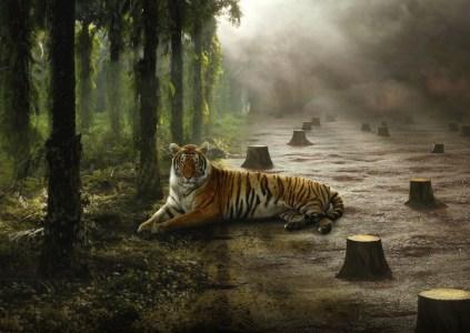 Рецензия на документальный фильм David Attenborough: A Life On Our Planet / «Дэвид Аттенборо: Жизнь на нашей планете»