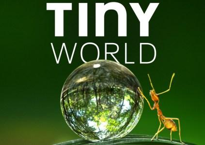 Рецензия на документальный сериал о природе Tiny World / «Крошечный мир»