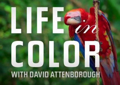 Рецензия на документальный сериал Life In Colour with David Attenborough / «Жизнь в цвете с Дэвидом Аттенборо»