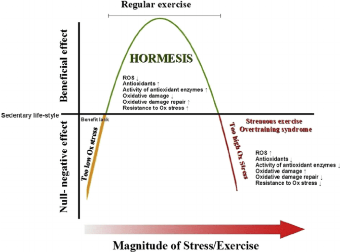 fig-1-hormesis-and-exercise-regular-exercise-elicits-hormesis-reduces-oxidative