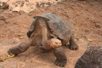 Galapogos 092
