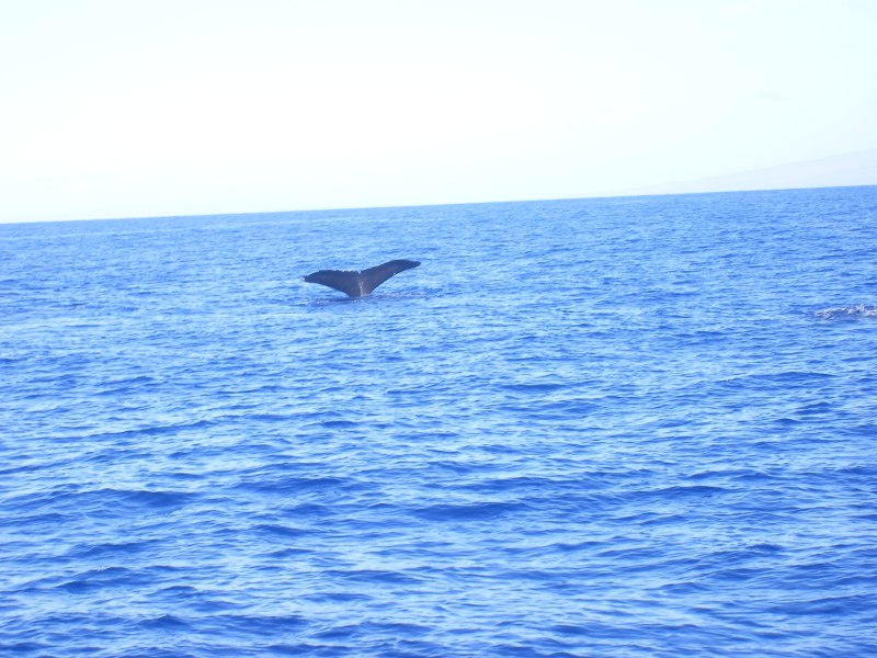 Whale_Watch (8)