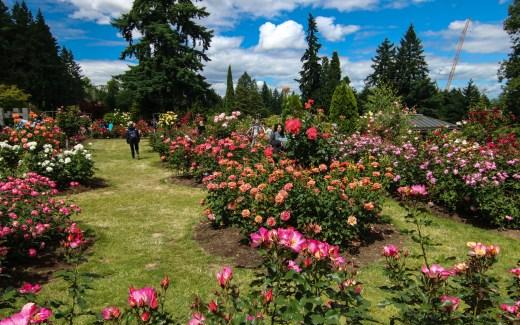 Oregon: Portland – Rose Test Garden