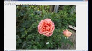 Free Photo Viewers for Windows 10