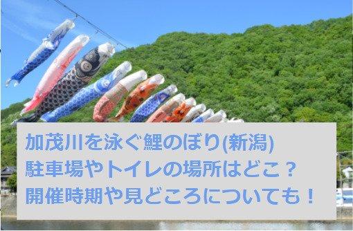 加茂川を泳ぐ鯉のぼり(新潟)2021の駐車場やトイレの場所はどこ?開催時期はいつからいつまで?見どころについても!