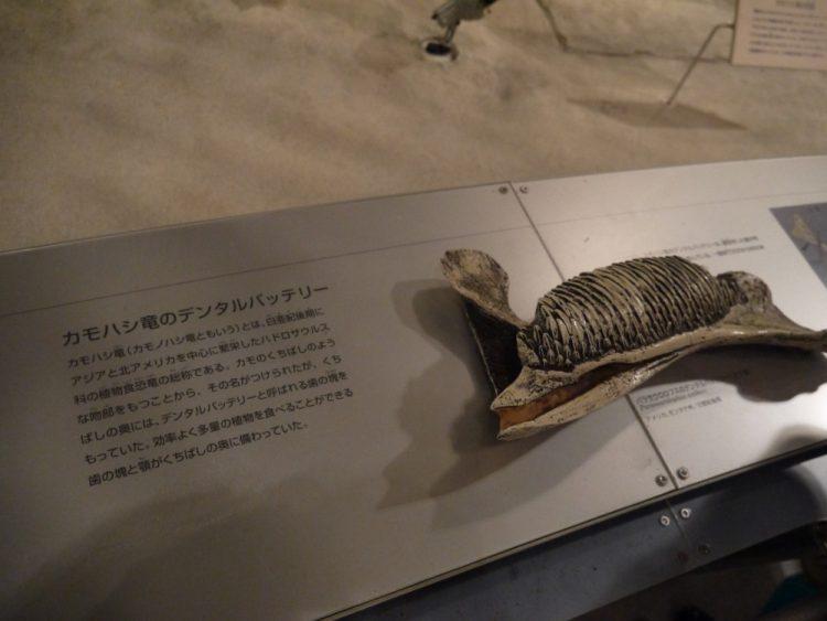 カモノハシ竜のデンタルバッテリー