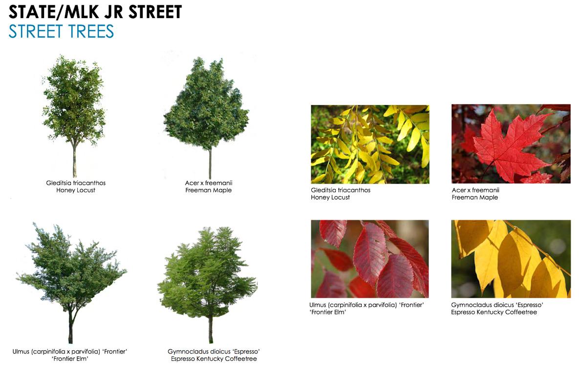 Commons-Street-Trees