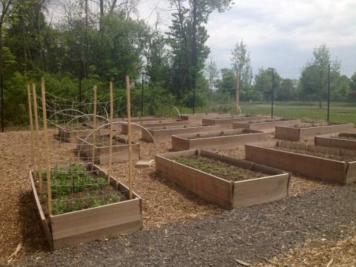 Upper garden beds 5.26.16