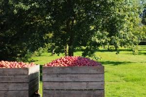 Dupont Harvest