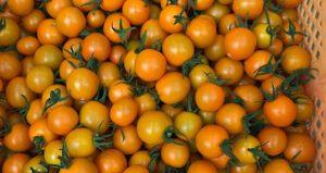 オレンジ千果_トマト直売_いちごの杜