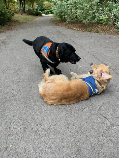 Malgré leur compétence et leur talent, ce sont des chiens, qui aiment jouer..
