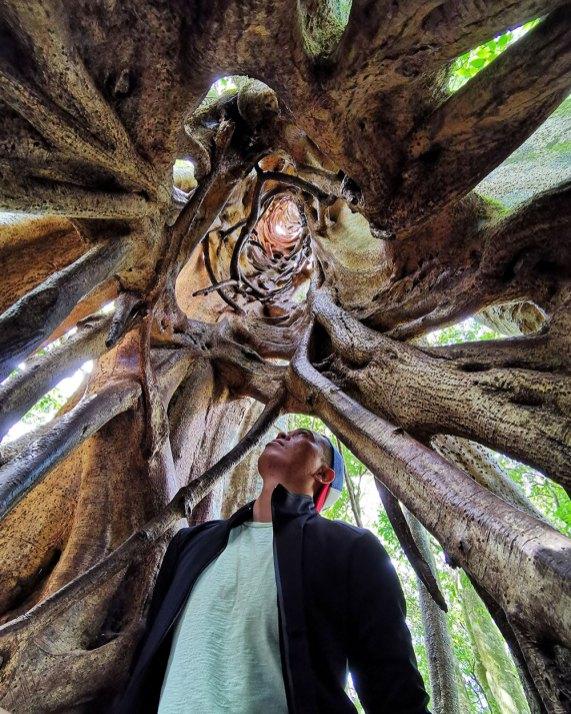 Ficus Tree (Monteverde, Costa Rica)