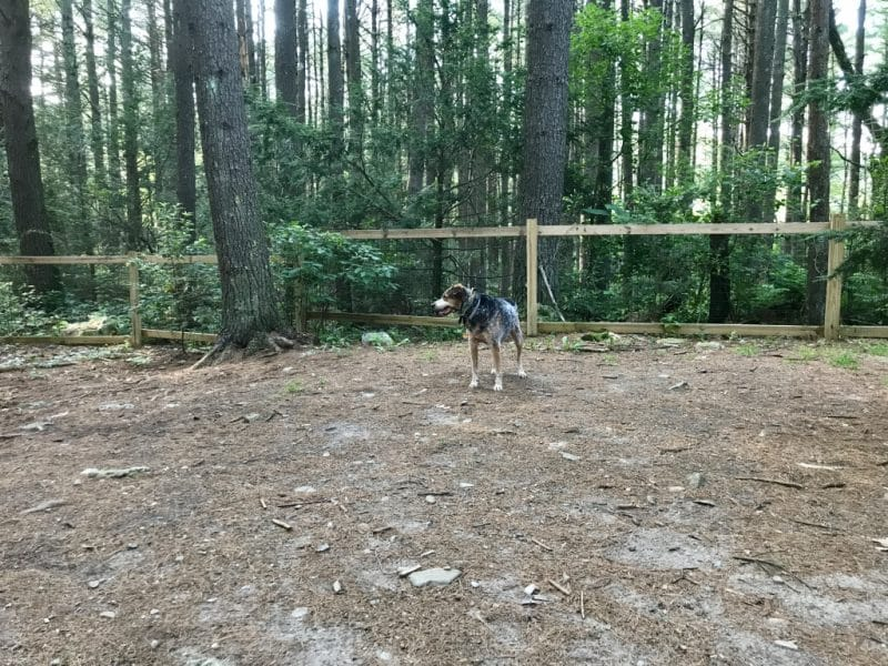 Dog Park Boston Minute Man Campground