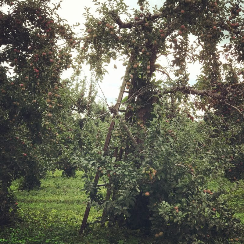 Apple Orchard RV Camping